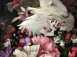 Bird-Series-1