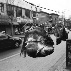 "Birdhead, ""Untitled,"" cellulose black and white print, 100 x 121 cm, 2011. 鸟头, ""无题"", 黑白摄影, 100 x 121 cm, 2011年。"
