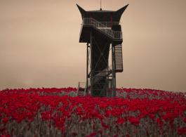 Beaugeste Photo Gallery - wang lin - Stray tulips