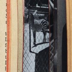 James Cohan - BAUM___Zebra_2010_small1
