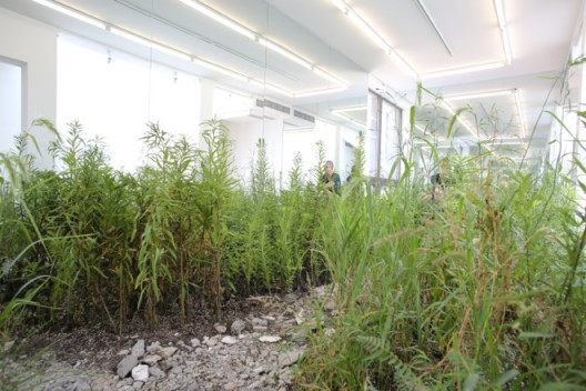 """Weed Party (installation view at Leo Xu Projects)"", weeds, dirt, mirrors, 2015《Weed Party》 (Leo Xu Projects 装置现场),野草,泥土,镜子,2015"