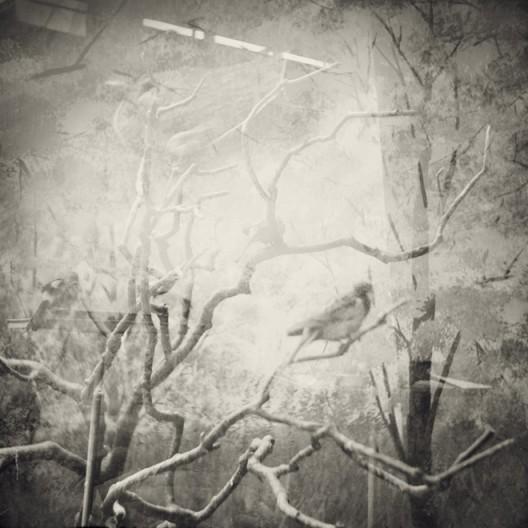 吠盲-几只鸟Alone Whisper-Several Birds