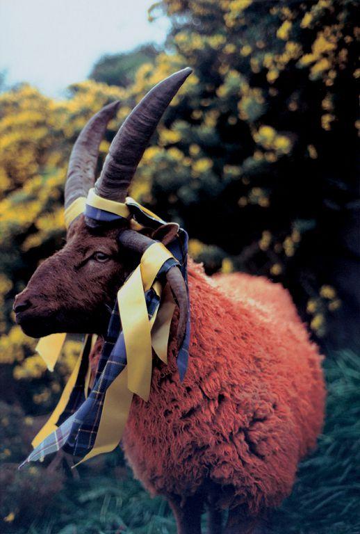 马修•巴尼,《悬丝4》,剧照,1994(摄影:Michael James O'Brien;版权:马修•巴尼1994;鸣谢:Gladstone Gallery/纽约/布鲁塞尔)/ Matthew Barney, CREMASTER 4, Production still, 1994(©1994 Matthew Barney, Photo: Michael James O'Brien, Courtesy Gladstone Gallery, New York and Brussels)