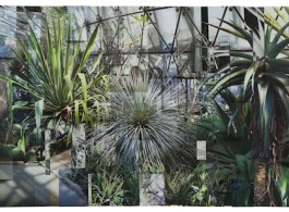 Greenhouse 2, 2017,  Archival pigment print 43 1/4 x 98 3/8 inches (110 x 250 cm), Image courtesy of Klein Sun Gallery and the artist, © Ji Zhou.