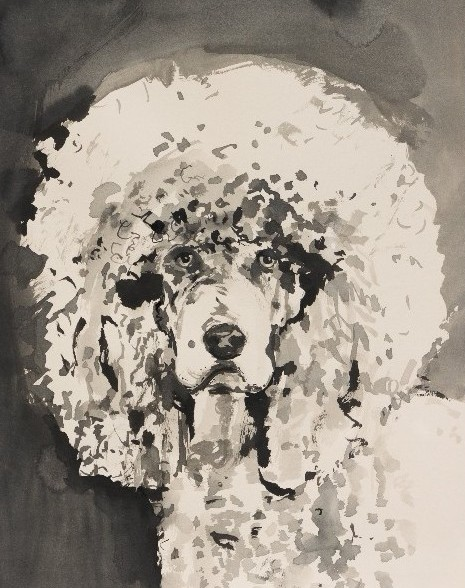 Dane Lovett, Standard Poodle 4