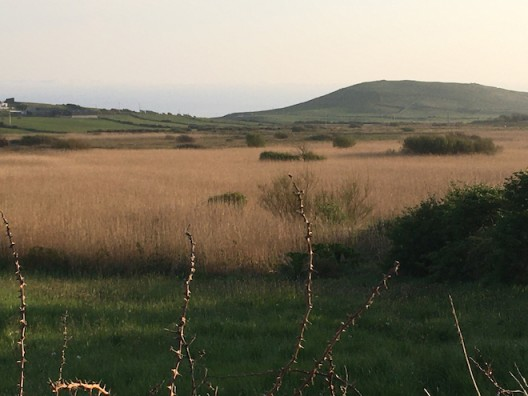 African Savannah at Ballyconnell © Claire Kerr 2020