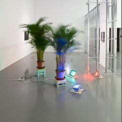 Initial Ritual of Mr. Butterflies, Butterfly palm tree, LED light, spinner, Dimensions variable, 2015 杨沛铿,《蝴蝶先生的第一步》,蝴蝶棕榈树,LED灯,转盘,尺寸可变,2015