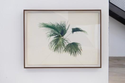 《无题(棕榈树 )No. 2》,纸本水彩,76.5 x 56 cm,84 x 63.5 x 7 cm (带框),2014 / Hu Yun,
