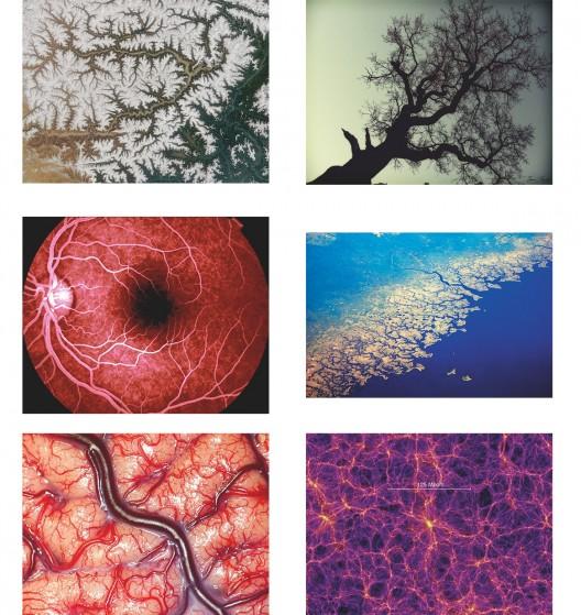 插图27 大自然中的分形图片:树、西 藏雅鲁藏布江、海岸线、视网 膜中的血管、宇宙、大脑。