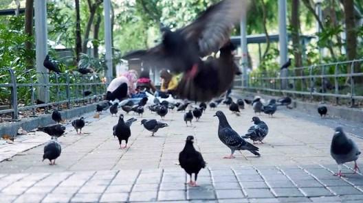 """Black bird Island"", Video, 6'30"", sound, color 《黑鸟岛》,录像, 6'30"", 有声, 彩色"