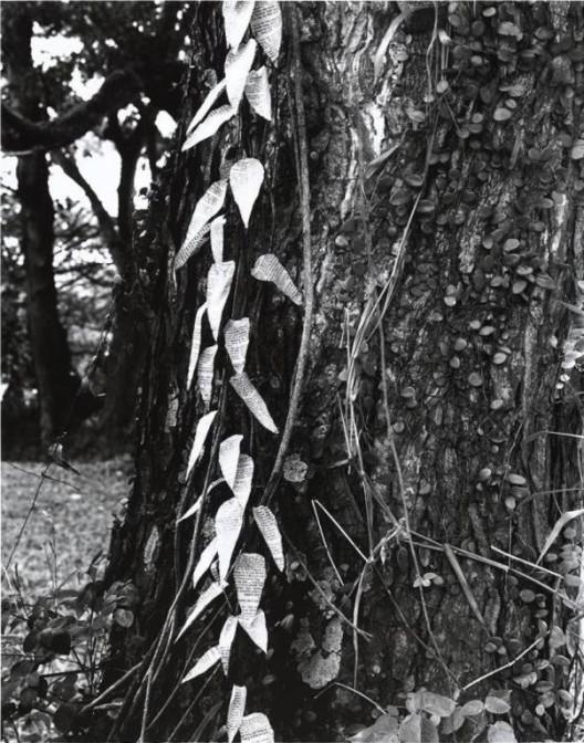 Simryn Gill. Forest #16, 1996–1998. Gelatin silver print. M+, Hong Kong. . Simryn Gill Simryn Gill,《森林#16》,1996至1998年,银盐照片,M+,香港 . Simryn Gill。