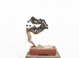 Bonsai / 2016 / Iron dust, magnet, iron nail, wood branch / 50 x 43 x 39 cm