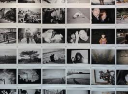 Birdhead photo collection at Shanghart